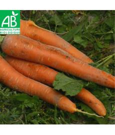 Graines bio de carotte de Carentan
