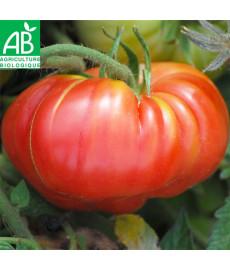 Tomate potiron écarlate