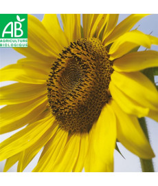Graines bio de tournesol californien