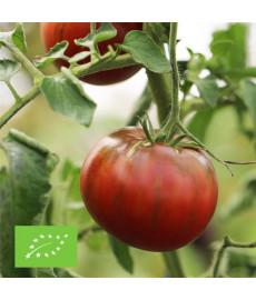 Graines bio de tomate noire de crimée