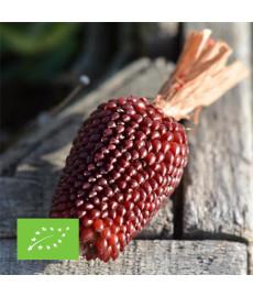 Maïs fraise pop corn bio