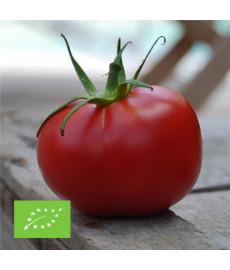 Tomate rose de berne bio