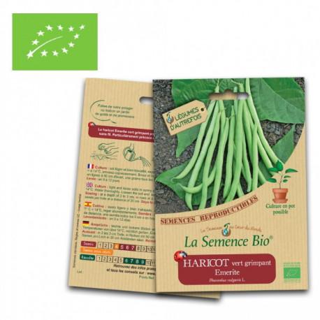 Haricot vert grimpant Emerite graines bio