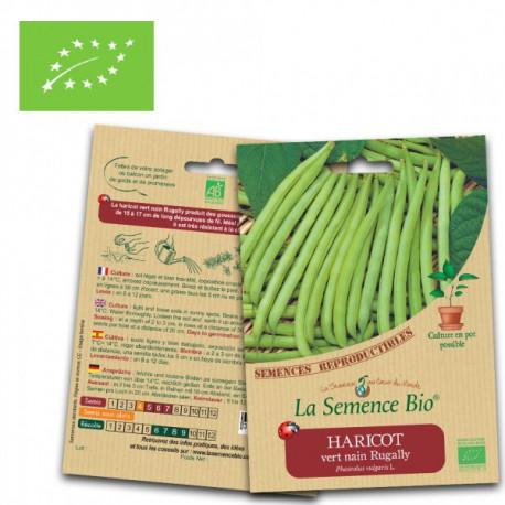 Haricot vert nain Rugally graines bio