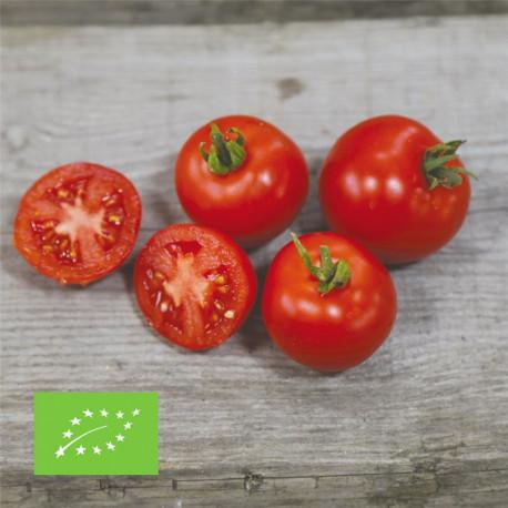 Tomate maja bio