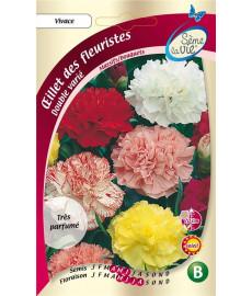Oeillet (des fleuristes) -...