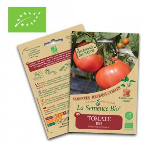 Graines tomates bio 1884