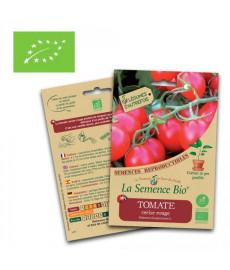 Graines tomates cerise rouge bio