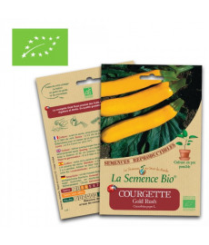 Graines courgette jaune gold rush bio
