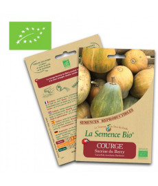 Graines courge sucrine du berry bio