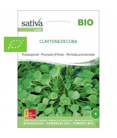 Pourpier d'hiver ou Claytone de Cuba graines bio