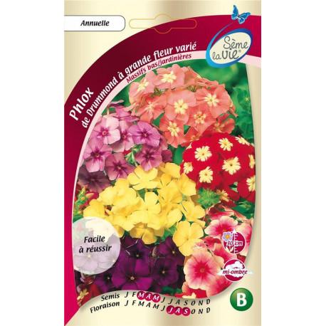 Graines de phlox de Drummond à grandes fleurs