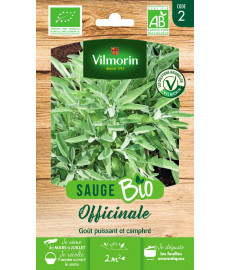 Graines bio de sauge officinale