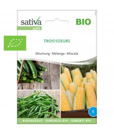 Graines bio de mélange Maïs-Haricot-Courgette