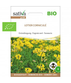 Graines bio de engrais vert de lotier corniculé
