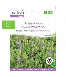 Graines bio de tête de dragon ou mélisse Moldave