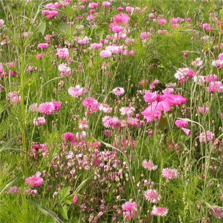 Mélange fleuri camaïeu rose