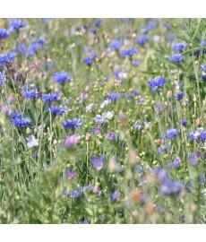Mélange fleuri camaïeu bleu