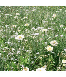 Mélange fleuri camaïeu blanc et crème