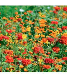 Mélange fleuri camaïeu orange