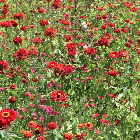 Mélange fleuri camaïeu rouge