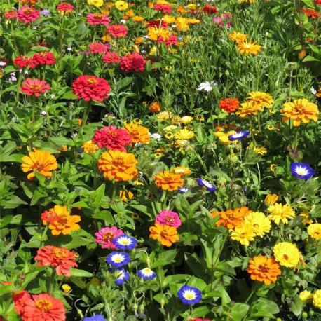 Fleurs mellifères en mélange pour Balcon - graines à semer