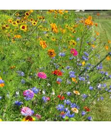 Mélange fleuri: graines de fleurs pour Coccinelles
