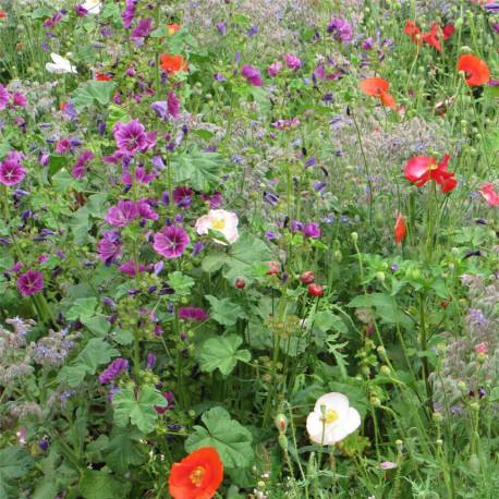 Graines de fleurs pour ombre