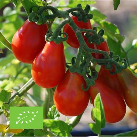 Tomate poire rouge bio graines à semer
