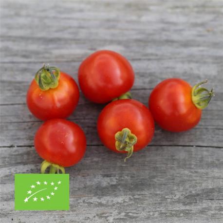 Tomate cerise bio graines à semer