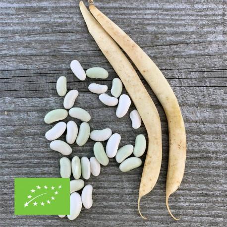 Flageolet haricot nain graines bio à semer