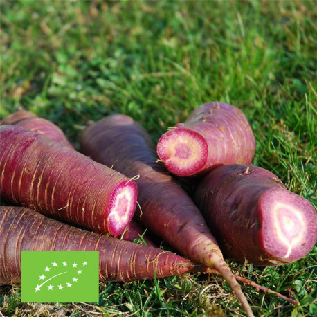 Graines bio de carotte Gniff
