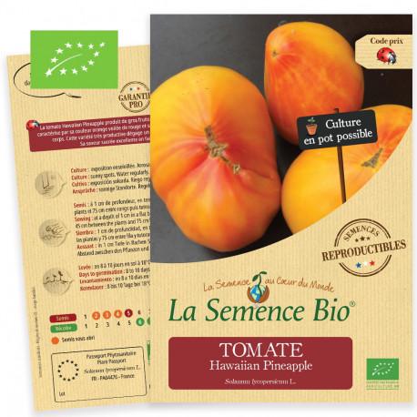 Graines bio à semer de tomate Hawaiian Pineapple