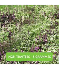 Mélange de graines de plantes anti-moustiques