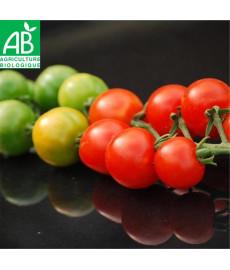 Tomate gardener's delight -...