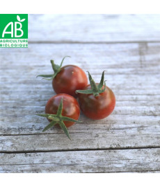 Tomate chinoise Black Pearl
