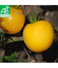 Tomate pêche jaune bio