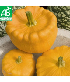 Courge pâtisson orange bio
