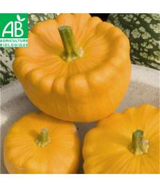 Courge pâtisson orange bio