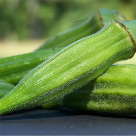Okra gombo graines non traitées