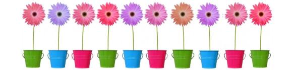 Graines de fleurs ornementales pour bouquets