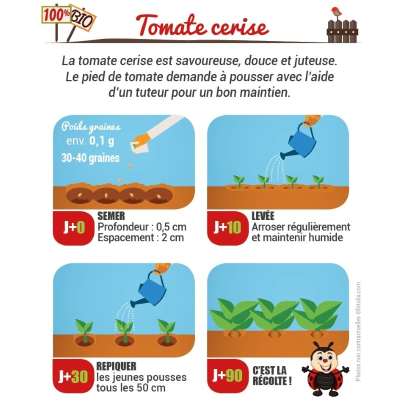 Méthode de semis de tomate cerise
