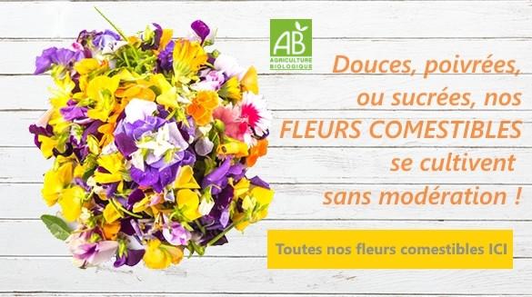 bannière-fleurs-comestibles